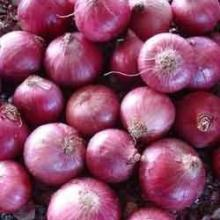 natural/organic/lowest price fresh red onion
