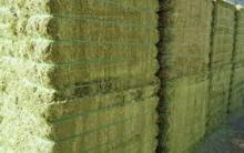 Alfalfa Hay, Timothy Hay, Animal feed / pelleted anima feed lucerne hay