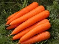 HIGH QUALITY FRESH CARROT SUPPLIERS