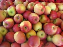 South African Fresh fuji apple suppliers