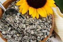 sunflower seeds 5009 ,363 20/64 22/64 24/64