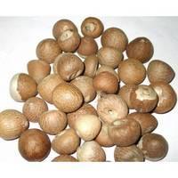 Betel Nut / Hazel Nuts