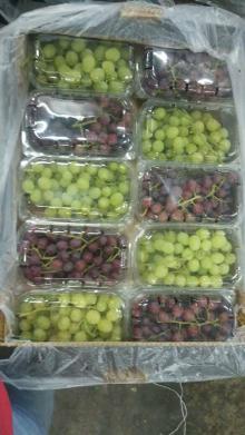 fresh Grapes egypt,egyptian fresh Grapes ,grapes egypt