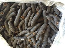 sea cucumber natural sun dried holuthuria mexicana large size (3 lbs)