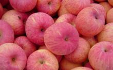 Wholesale High Quality fresh apple fruit price