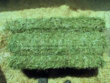 Good Quality Animal Feed Alfalfa Hay
