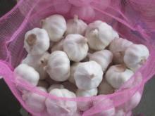 100 % Top Quality Fresh Garlic