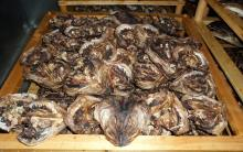 100% Norwegian Dried Stock Fish For Sale
