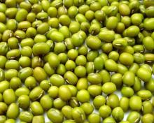 Green Mung Beans / Vigna Beans/ Organic Mung Beans for sale