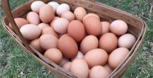 White/Brown Fresh Chicken Eggs