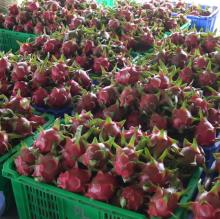 Fresh Dragon Fruit for Export