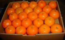 Fresh Fruits Mandarin Orange From South Africa