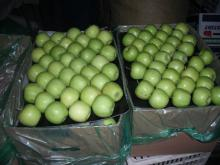 Fresh Apples ( Fuji, Gala, Red, Golden Delicious Apples)