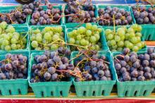 Fresh Grapes, Seedless Grapes, Grapes , Seedless Grapes, Grapes with Seeds, Green Grapes, Red Grapes