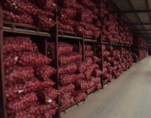 Wholesale Fresh Onion, Yellow Onion, Red Onion Exporters