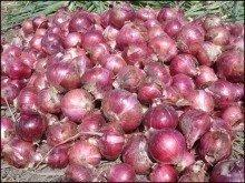 quality onions with cheap price