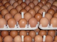 Chicken Eggs Brown and White XL SIZE 73 Gr and Higher 10pcs Packing