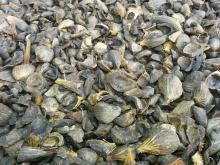 Good Quality Palm Kernel Shell For Sell