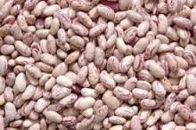 Light Speckled Kidney Beans /Pinto Beans/Sugar Beans