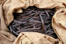 Vanilla Bean for Sale (Vanilla Beans )