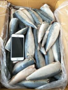 2017 frozen mackerel HGT pacific mackerel HGT