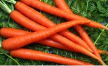 Good Quality Fresh Carrot (80-150g)