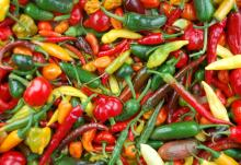 Fresh Chillies/Dried Chillies