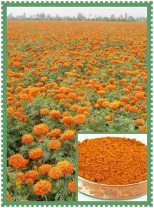 Best Marigold extract powder, natural zeaxanthin lutein, bulk in stock