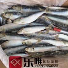 Wholesale   Frozen   seafood  sardine fish for sale bait