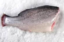 Frozen Wild Nile Perch Fish H&G