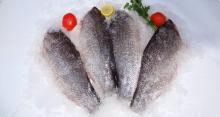 Nile Perch Frozen skin of fillets
