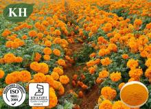 100% Pure Natural Marigold Extract Lutein Zeaxanthin