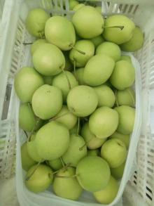 good quality shandong pear