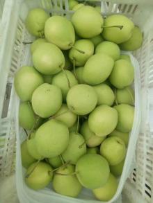 good quality shandong pear