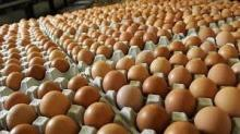 Fresh Brown Table Chicken Eggs for sale now