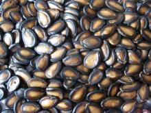 Melon / Pumpkin Seeds/ Black Melon Seeds/ Water Melon Seeds