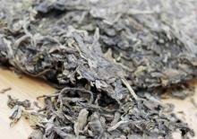 puer tea raw/sheng/unfermented