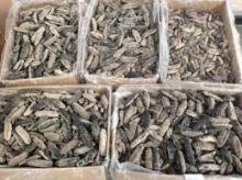 Dried Wild Sea Cucumber