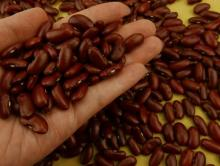 Kidney Beans, Green Beans, Mung beans, Black beans for sale