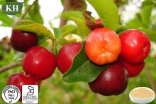 Natural Vitamin C 5%-25% Acerola Cherry Extract