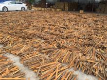 Cinnamon (Cassia)