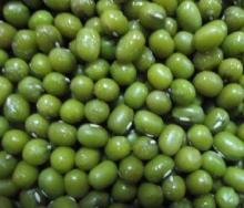 IQF Green Soya Bean