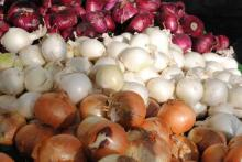 high quality yellow onion