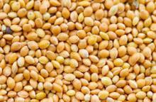 Grade A Dry Millet seeds