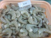 hgh quality frozen headless shrimp