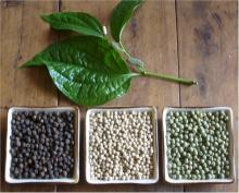 .Vietnam. Black Pepper Prices.