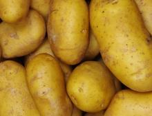CHEAP- QUALITY FRESH -IRISH POTATOES FOR FAST SHIPMENT