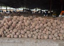 Fresh- Irish potatoes- With Low Prices-