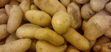 Super Grade Fresh Holland Potatoes Fresh- Irish Potatoes French= Potatoes for sale-