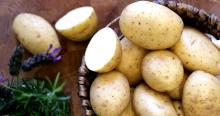 fresh potato for expor=t with low price.